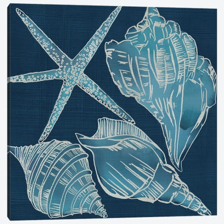 Marine Shells III Canvas Print #ZAR716} by Chariklia Zarris Canvas Print