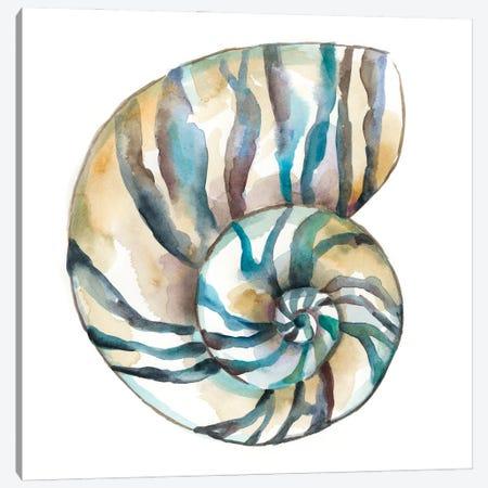 Aquarelle Shells II Canvas Print #ZAR780} by Chariklia Zarris Canvas Art Print
