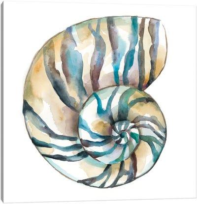 Aquarelle Shells II Canvas Art Print
