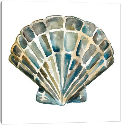 Aquarelle Shells IV Canvas Art Print