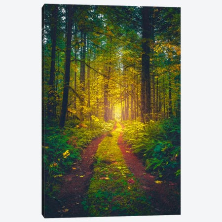 The Forest Of Dreams Canvas Print #ZDO22} by Zach Doehler Canvas Wall Art