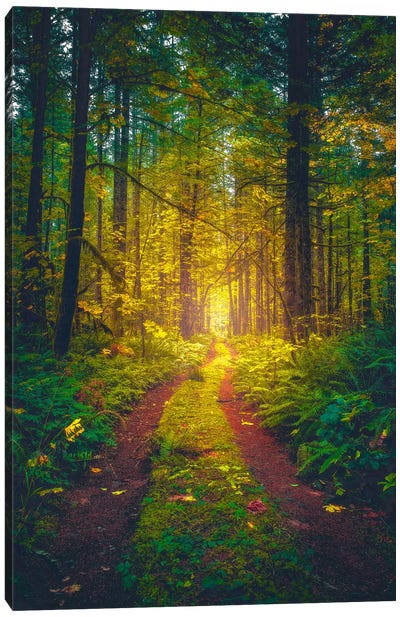 The Forest Of Dreams Canvas Art Print