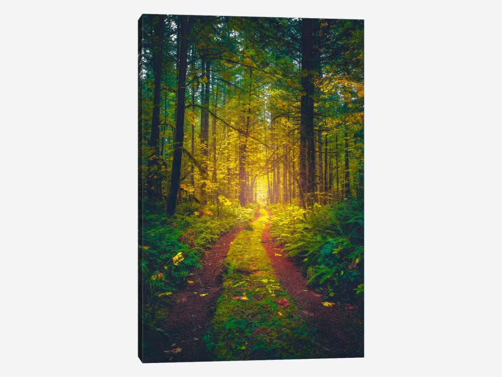 The Forest Of Dreams by Zach Doehler 1-piece Canvas Art