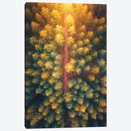Hidden Pathways Canvas Print #ZDO58} by Zach Doehler Canvas Print
