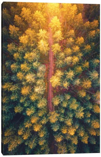 Hidden Pathways Canvas Art Print