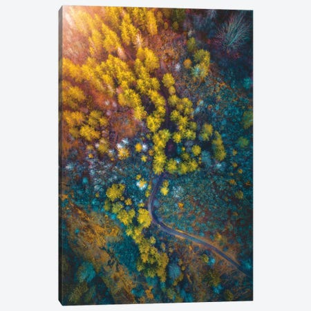 Into The Forest Canvas Print #ZDO61} by Zach Doehler Canvas Artwork