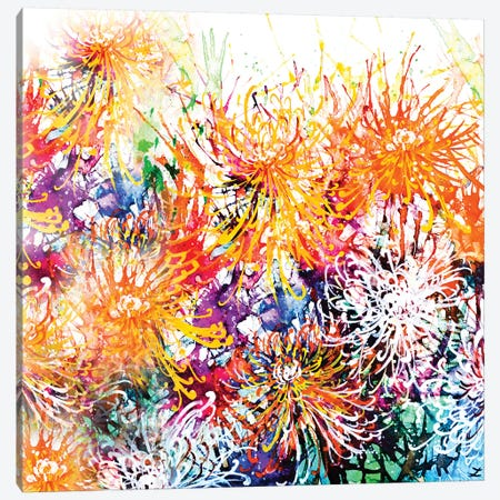 Sunny Chrysanthemums Canvas Print #ZDZ108} by Zaira Dzhaubaeva Canvas Art