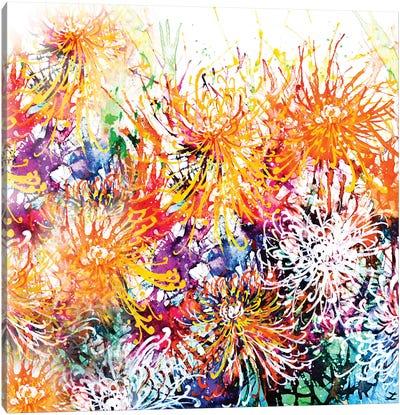 Sunny Chrysanthemums Canvas Art Print