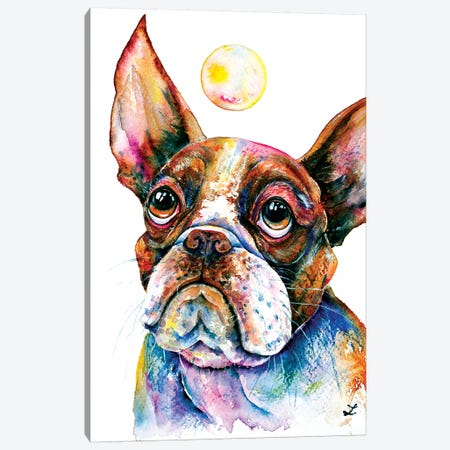 Boston Terrier Watching Soap Bubble   Canvas Print #ZDZ136} by Zaira Dzhaubaeva Canvas Wall Art