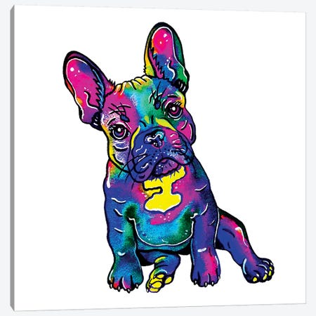 Colorful French Bulldog  Canvas Print #ZDZ139} by Zaira Dzhaubaeva Art Print