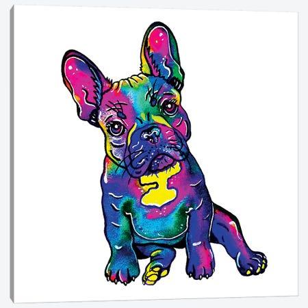 Colorful French Bulldog  Canvas Print #ZDZ139} by Zaira Dzhaubaeva Art Print