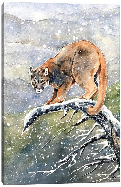 Cougar Watercolor  Canvas Art Print