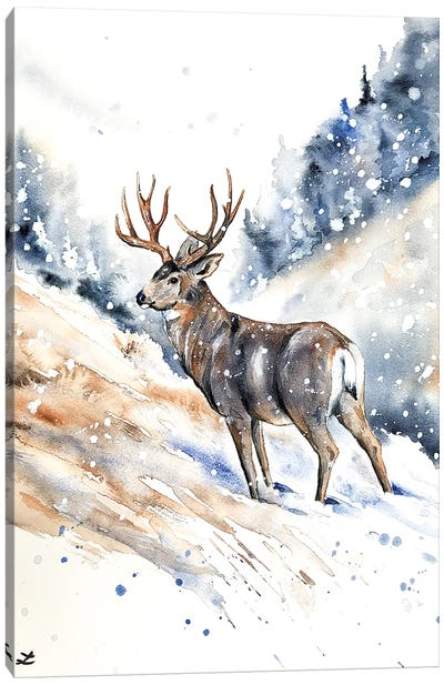 Mule Deer Buck Watercolor  Canvas Art Print