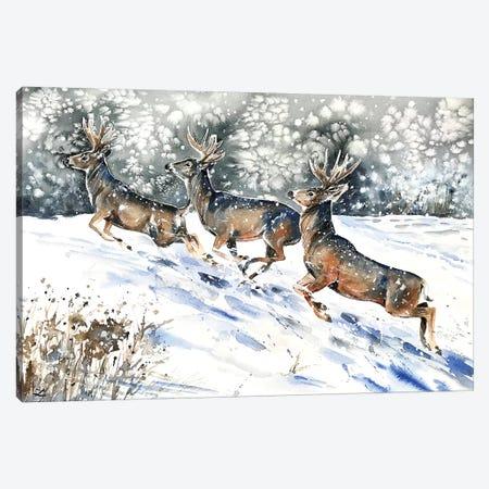 Mule Deer on the Run  Canvas Print #ZDZ154} by Zaira Dzhaubaeva Canvas Wall Art