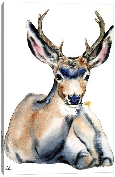 Resting Deer Watercolor   Canvas Art Print