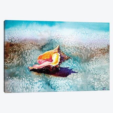 Shell   Canvas Print #ZDZ161} by Zaira Dzhaubaeva Canvas Art