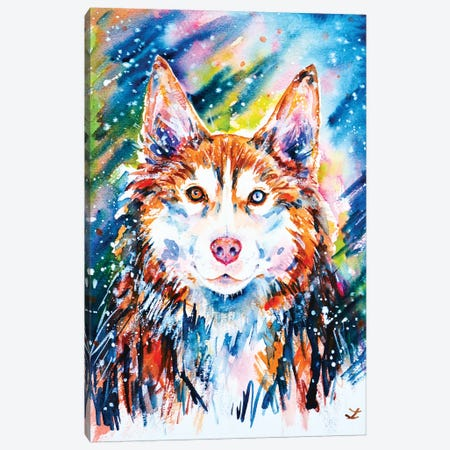 Husky Canvas Print #ZDZ189} by Zaira Dzhaubaeva Canvas Artwork