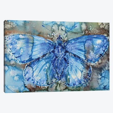Adonis Blue Canvas Print #ZDZ1} by Zaira Dzhaubaeva Art Print