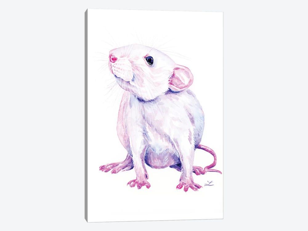 White Rat by Zaira Dzhaubaeva 1-piece Canvas Print