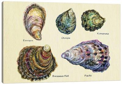 Oyster Types Canvas Art Print