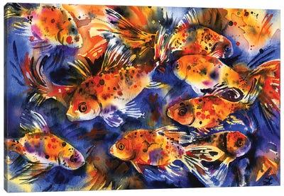 Shubunkin Goldfish Canvas Art Print