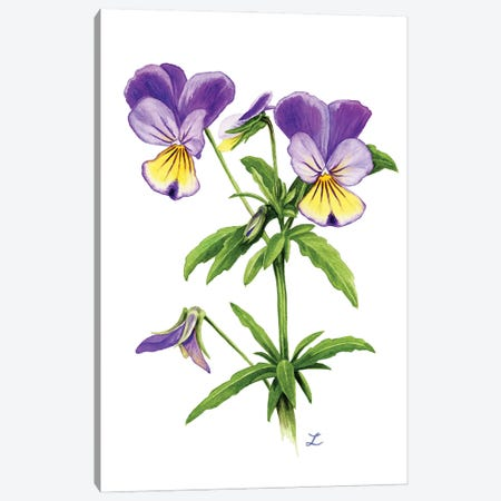 Wild Pansies Canvas Print #ZDZ223} by Zaira Dzhaubaeva Art Print