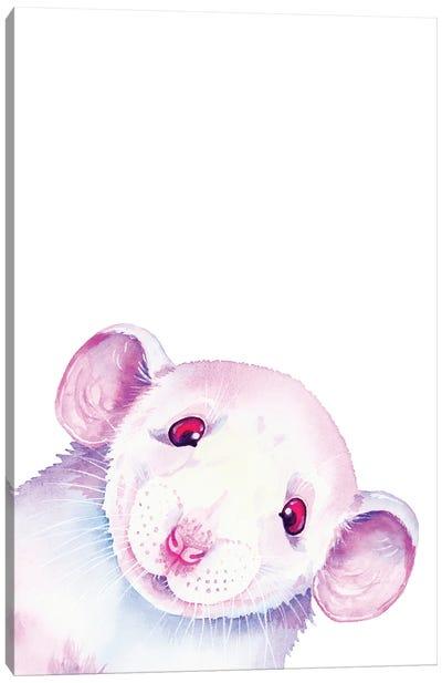 White Rat Peekaboo Canvas Art Print