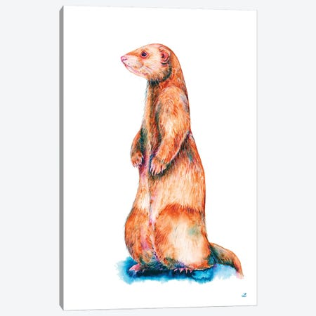 Cinnamon Ferret Canvas Print #ZDZ29} by Zaira Dzhaubaeva Canvas Print