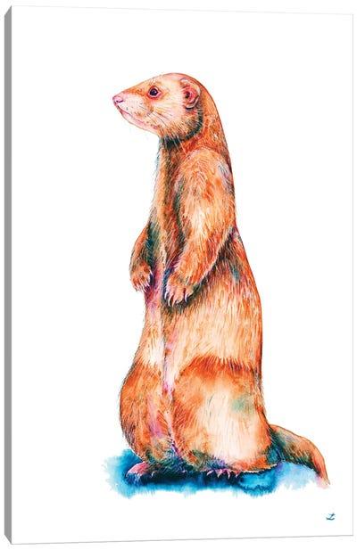 Cinnamon Ferret Canvas Art Print
