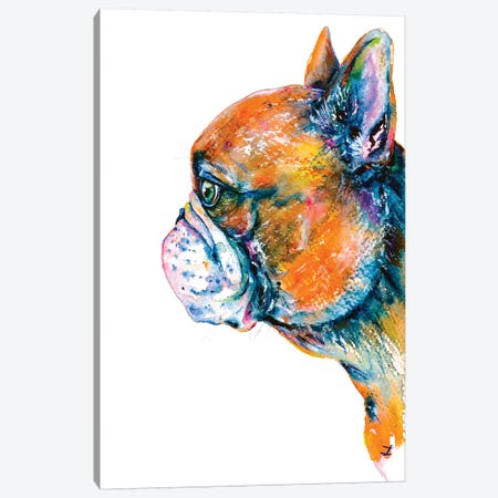 Red-Fawn Frenchie Canvas Print #ZDZ97} by Zaira Dzhaubaeva Canvas Art Print