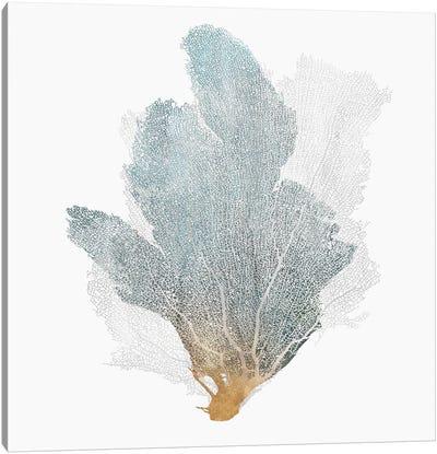 Delicate Coral II  Canvas Art Print