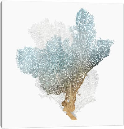 Delicate Coral III  Canvas Art Print