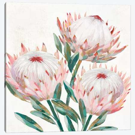 King Protea II  Canvas Print #ZEE250} by Isabelle Z Art Print