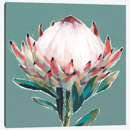Blooming King Protea  Canvas Print #ZEE275} by Isabelle Z Canvas Wall Art