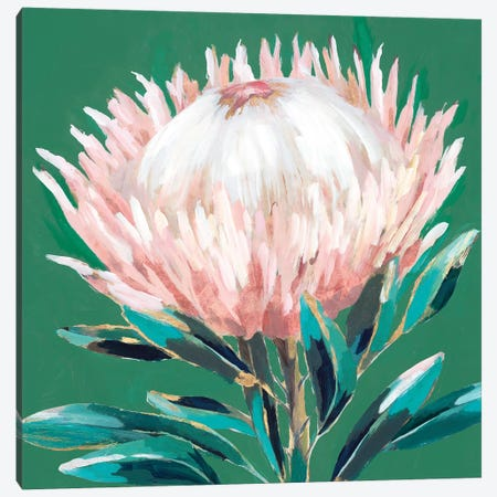Single King Protea  Canvas Print #ZEE286} by Isabelle Z Art Print