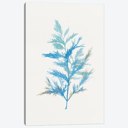 Whimsical Botanical I Canvas Print #ZEE30} by Isabelle Z Canvas Artwork