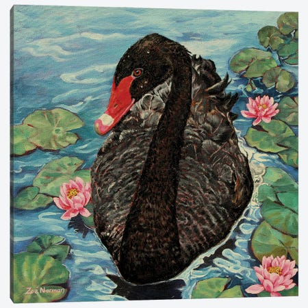 Black Swan. Canvas Print #ZEN103} by Zoe Elizabeth Norman Canvas Art