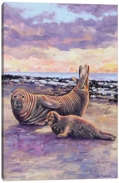 Grey Seals At Horsey Canvas Art Print
