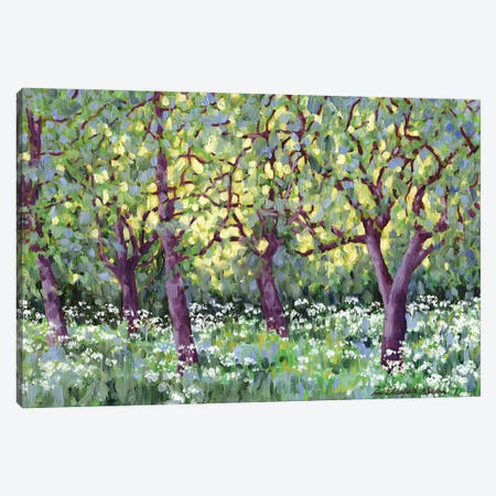 The Old Orchard Canvas Print #ZEN25} by Zoe Elizabeth Norman Canvas Print