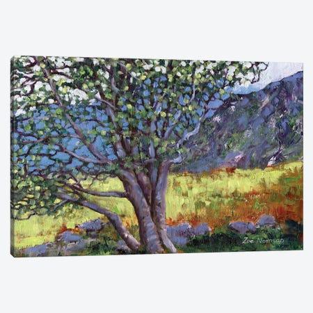 Welsh Mountainside Canvas Print #ZEN26} by Zoe Elizabeth Norman Art Print