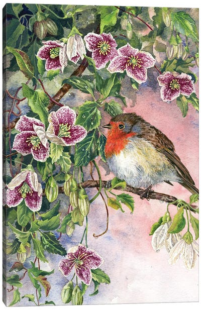 Robin And Winter Clematis Canvas Art Print