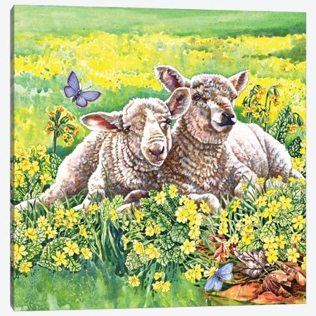 Spring Lambs Canvas Print #ZEN59} by Zoe Elizabeth Norman Canvas Art Print