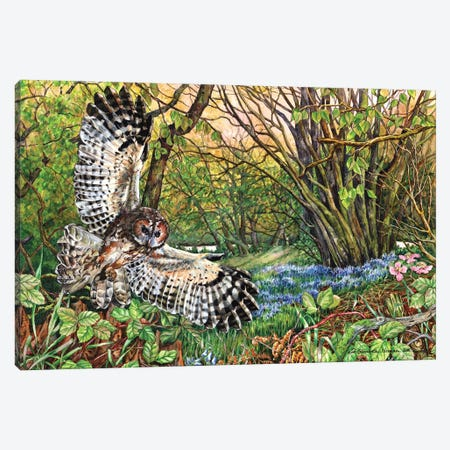 Tawny Owl And Bluebell Wood Canvas Print #ZEN63} by Zoe Elizabeth Norman Canvas Artwork