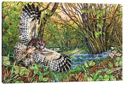Tawny Owl And Bluebell Wood Canvas Art Print
