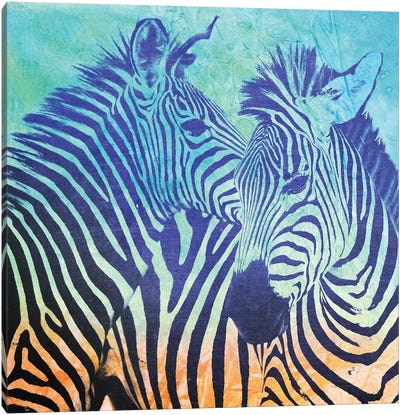 Teal Zebras Canvas Art Print