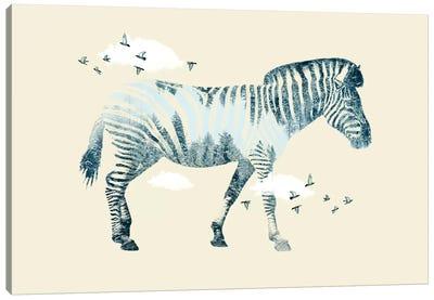 Zebra Dreaming Canvas Art Print