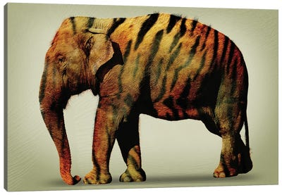 Tiger Elephant Canvas Art Print