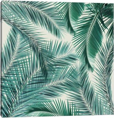 Palms II Canvas Art Print