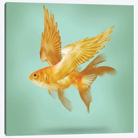 Flying Fish Canvas Print #ZEP76} by Vin Zzep Canvas Art