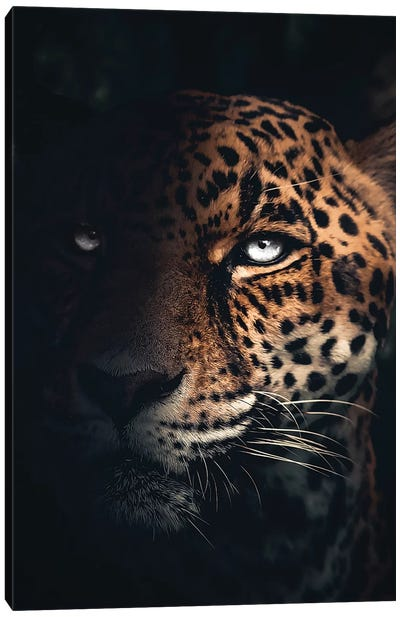 The Jaguar Canvas Art Print